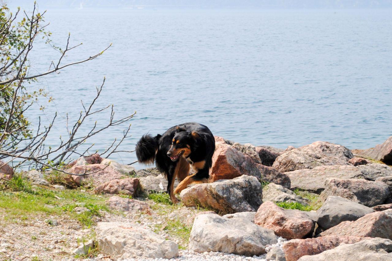 Urlaub mit hund am see ferien am wasser for Ferien am see