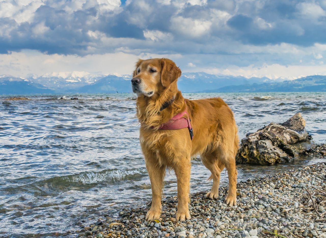 Beautiful Dog Pictures With Quotes