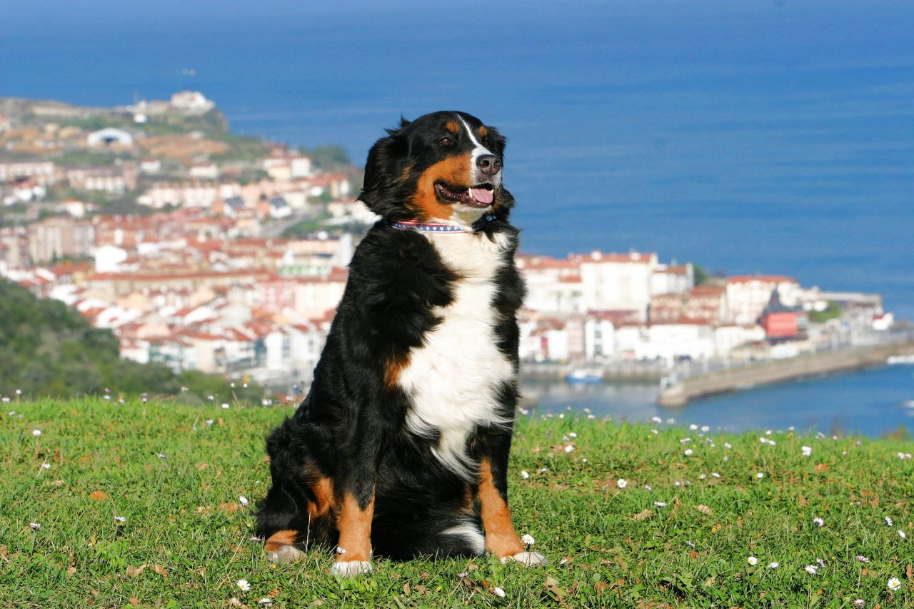 Urlaub Mit Hund Ferienwohnung Oder Haus Und Der Hund Ist Willkommen