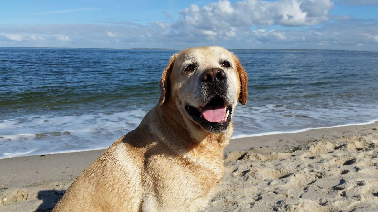 urlaub mit hund nordsee ferienwohnungen ferienh user