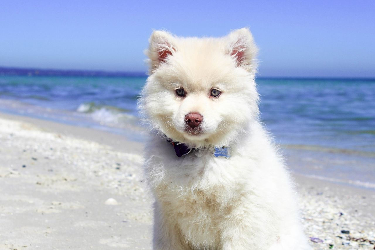 White Dogs With Blue Eyes Names